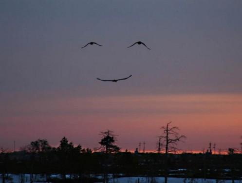 bird smiles